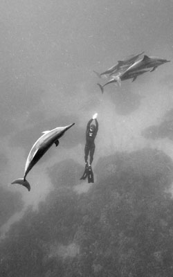 11th Annual FII Kona Freediving Camp