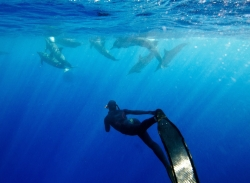 Girl freediving with dolphins | Alexandra Freeman || FII www.freedivinginstructors.com