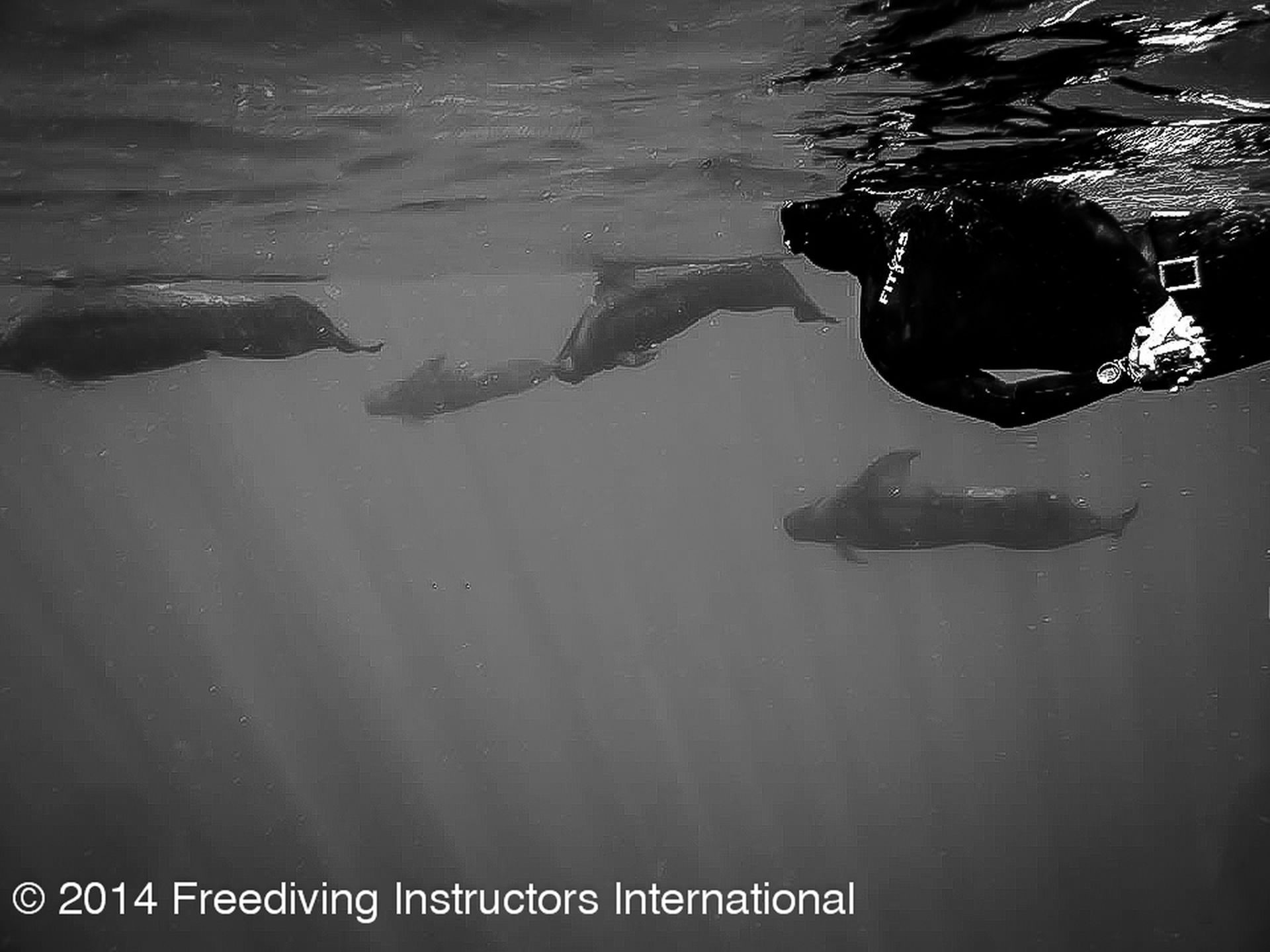 FII Freediver and Shortfinned Pilot Whales during the FII Kona Freediving Camp